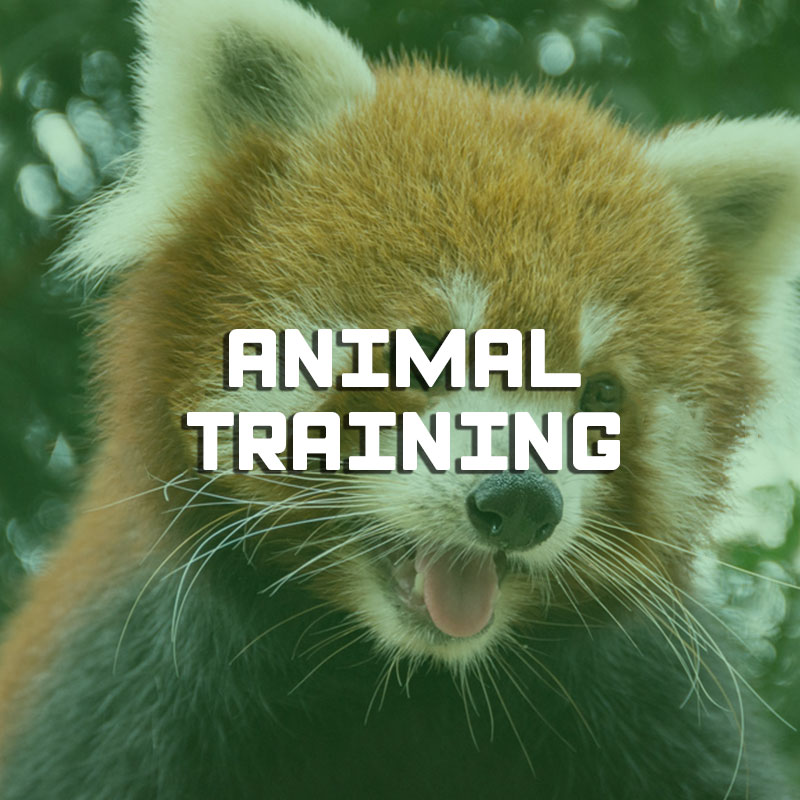 Animal training illustration