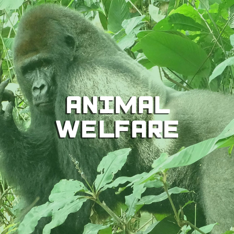 Animal welfare illustration